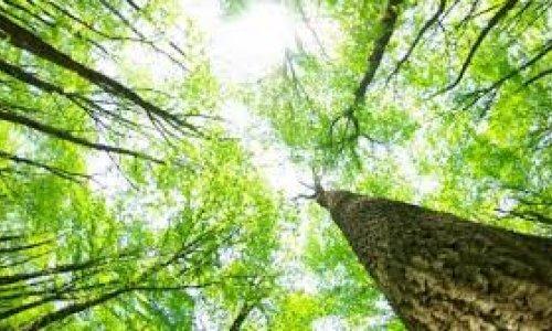 Ochrona lasu i ochrona zasobów leśnych